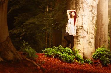 Autumn Forest by KimJSinclair