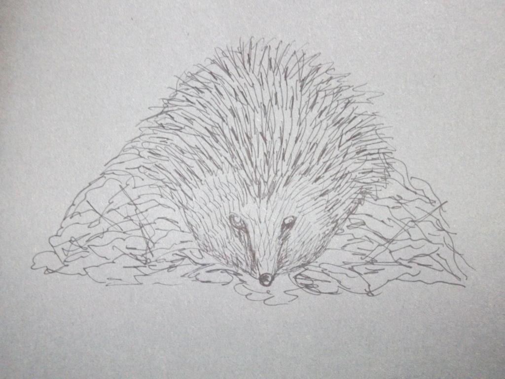 Line Drawing Hedgehog : Life drawing hedgehog by xcelestialangelx on deviantart