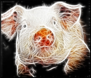 Surreal-Pig's Profile Picture