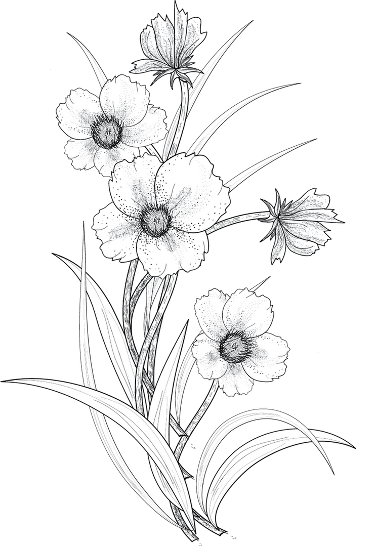Line Art Flowers Tumblr : Flowers png by roula on deviantart