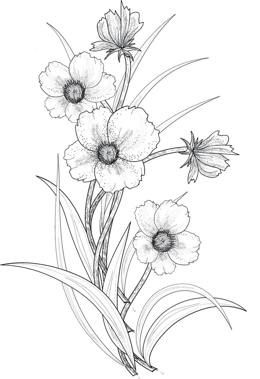 Contour Line Drawing Of A Flower : Flowers png by roula on deviantart