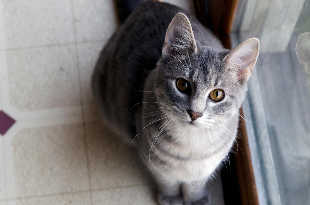 Feline Friend by MadeCheaply
