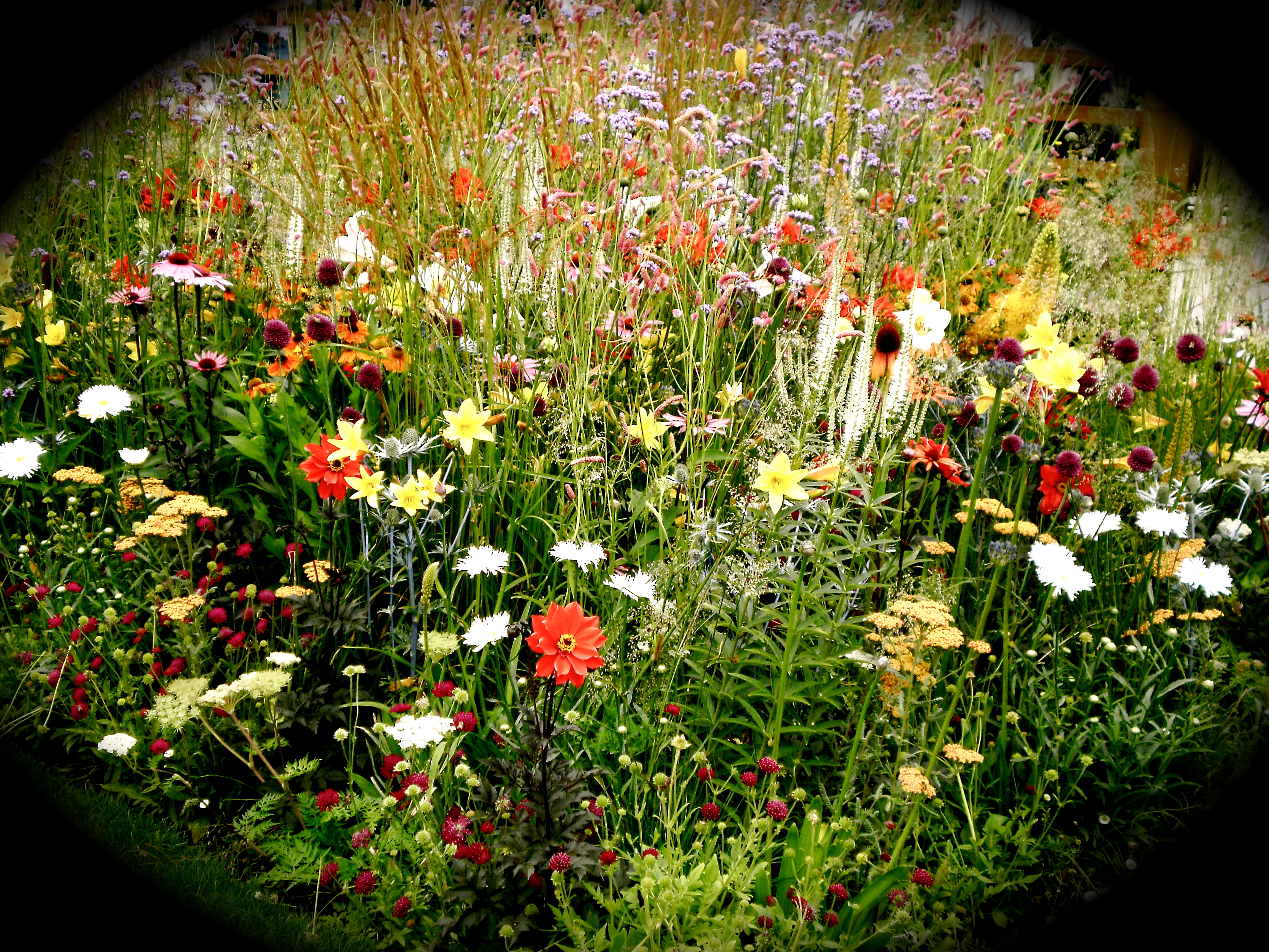 Cottage garden flowers by katiealicewoodmore on deviantart for Cottage garden plants