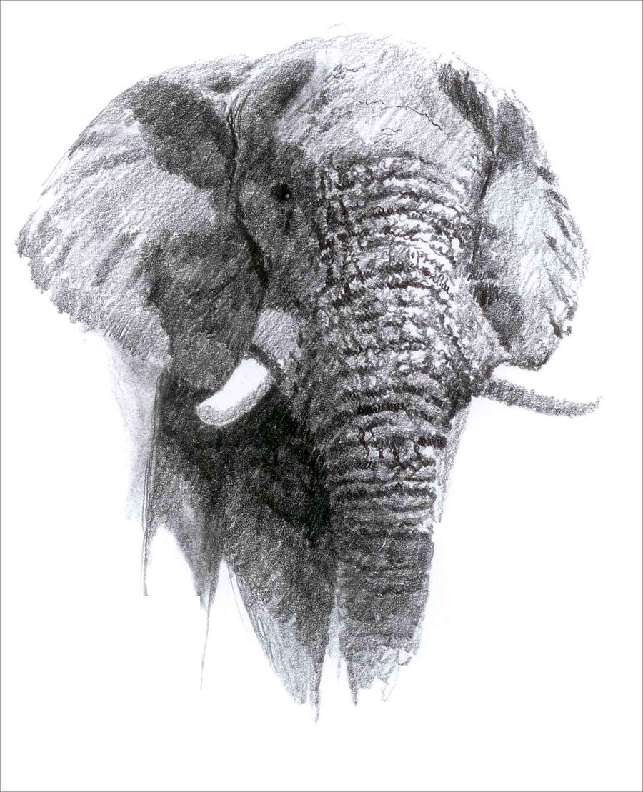 Line Drawings Of African Animals : African elephant by cosmogenesis on deviantart