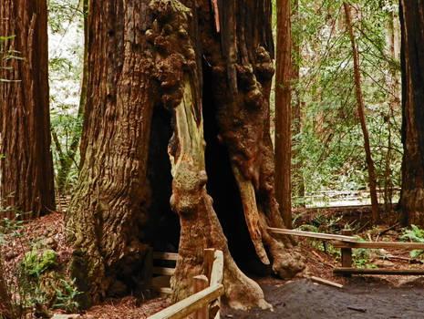 Redwood Condo