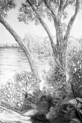 Minneapolis Trees