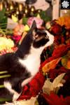 Cat among flowers - Milcia I