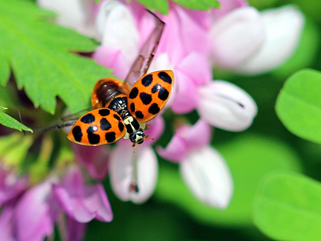 Lady bug lift off. by sweatangel