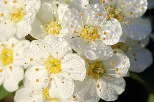 Morning Dew,, by sweatangel