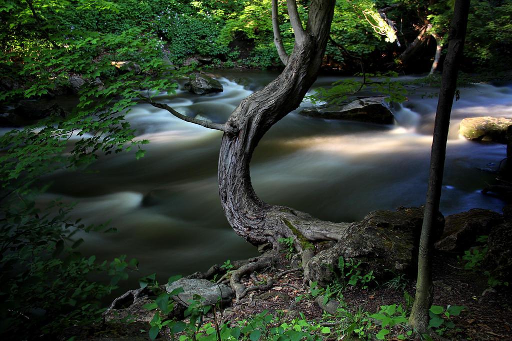 Wicked tree. by sweatangel