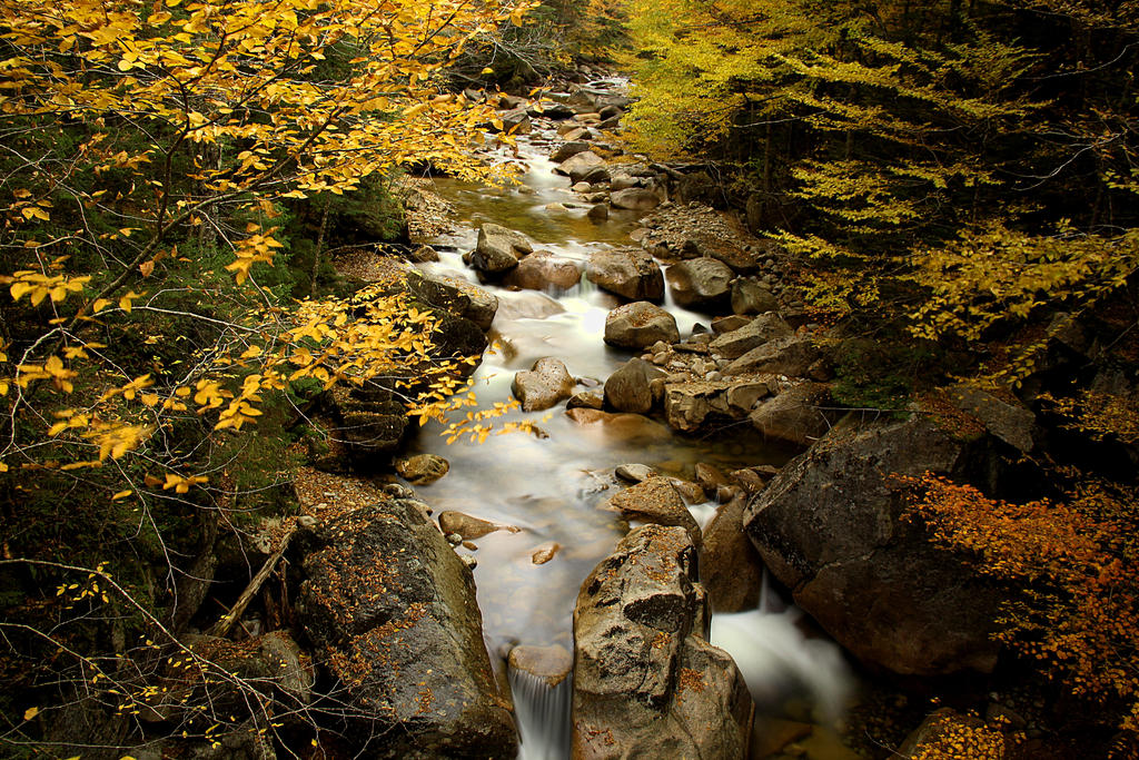 The river glows under the fall leaves. by sweatangel