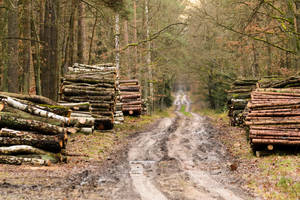 Forest Road by fot-ciosek