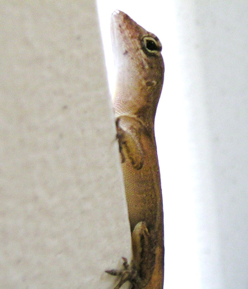 My Picture of a Lizard by aAriannerocks