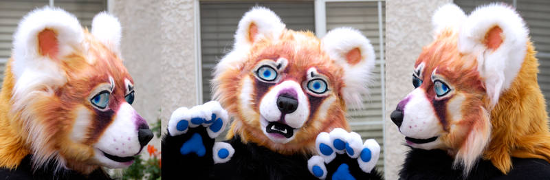 Red Panda FOR SALE
