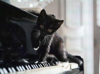 Piano Kitten by MarauderWolf93