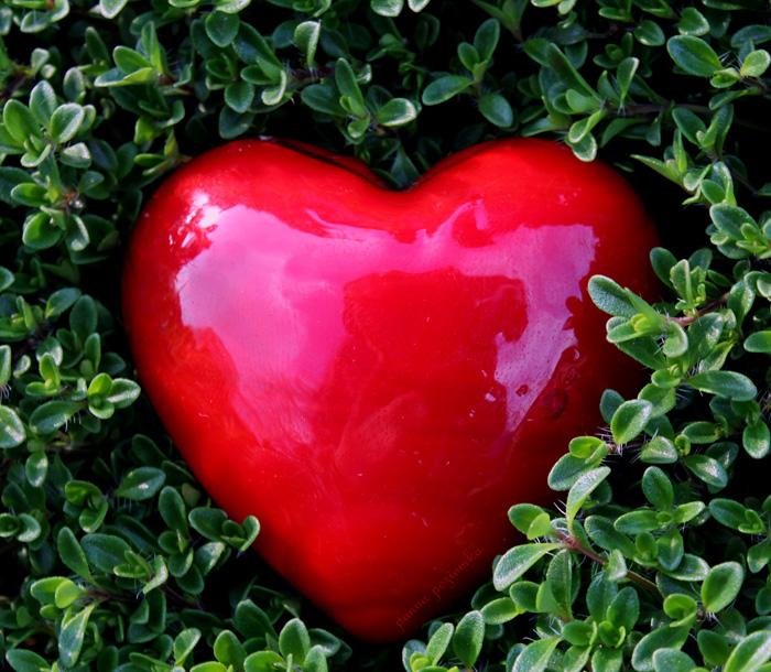 heart  in garden. by panna-poziomka
