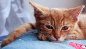 Red sleepyhead.