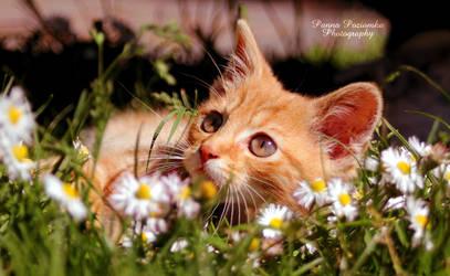 i want spring! by panna-poziomka