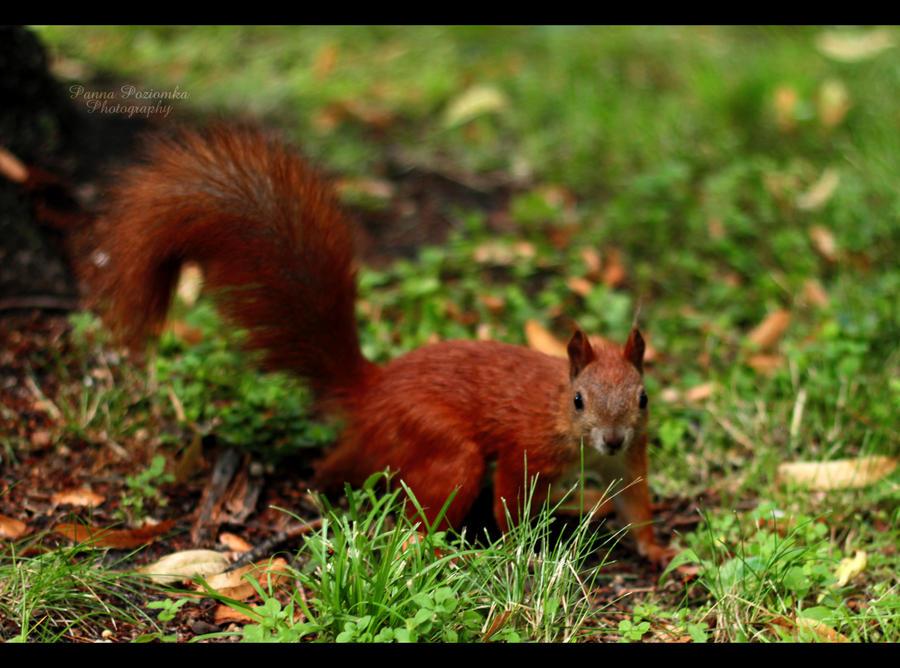 sweet, furry redhead :3 by panna-poziomka