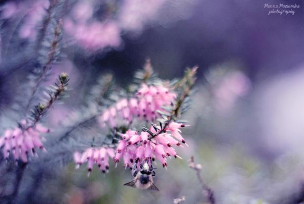 a bit of flora 'n' fauna by panna-poziomka