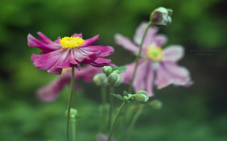 violet+flowers by panna-poziomka
