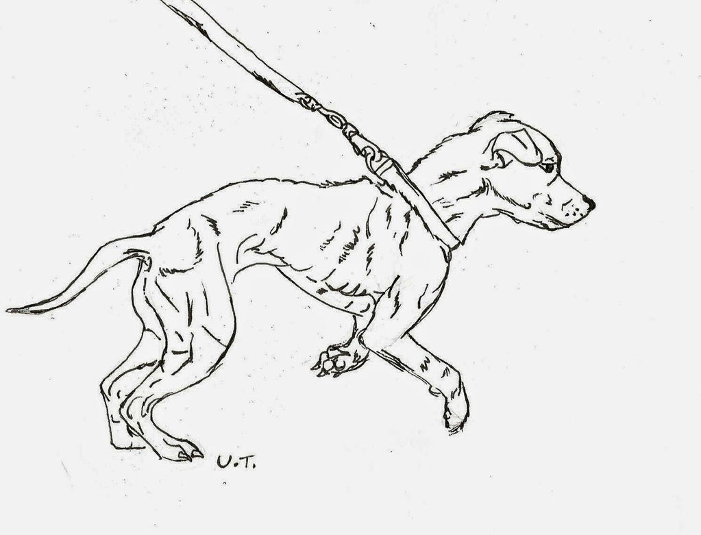 jack russell coloring pages - photo#21
