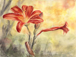 Daylily by libellchen