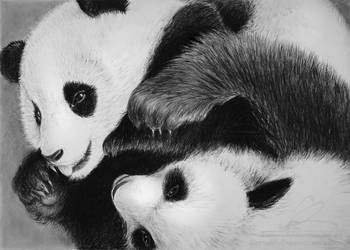 Panda by libellchen