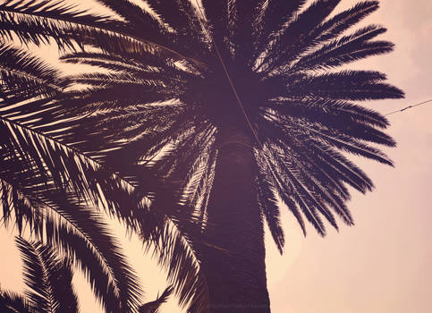 Palm tree in a sunset