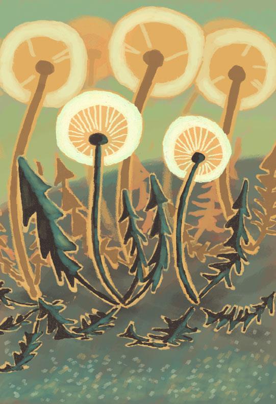 Dandelions In June by Agent-Jolliday
