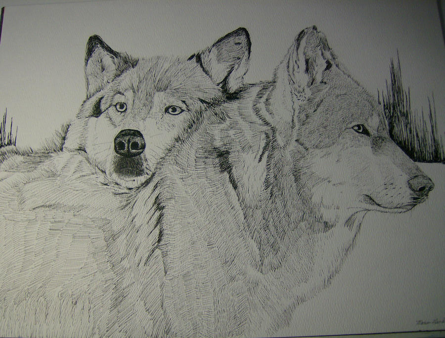 Black And White Wolf M...