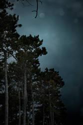 Storm Rising II