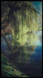 mourning willow by reachmehere