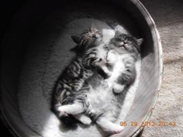 Sleeping Beauties by Vandyla