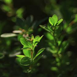 Greenish by Juchise