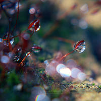 Rainy day by Juchise