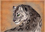 Smile of a snow leopard