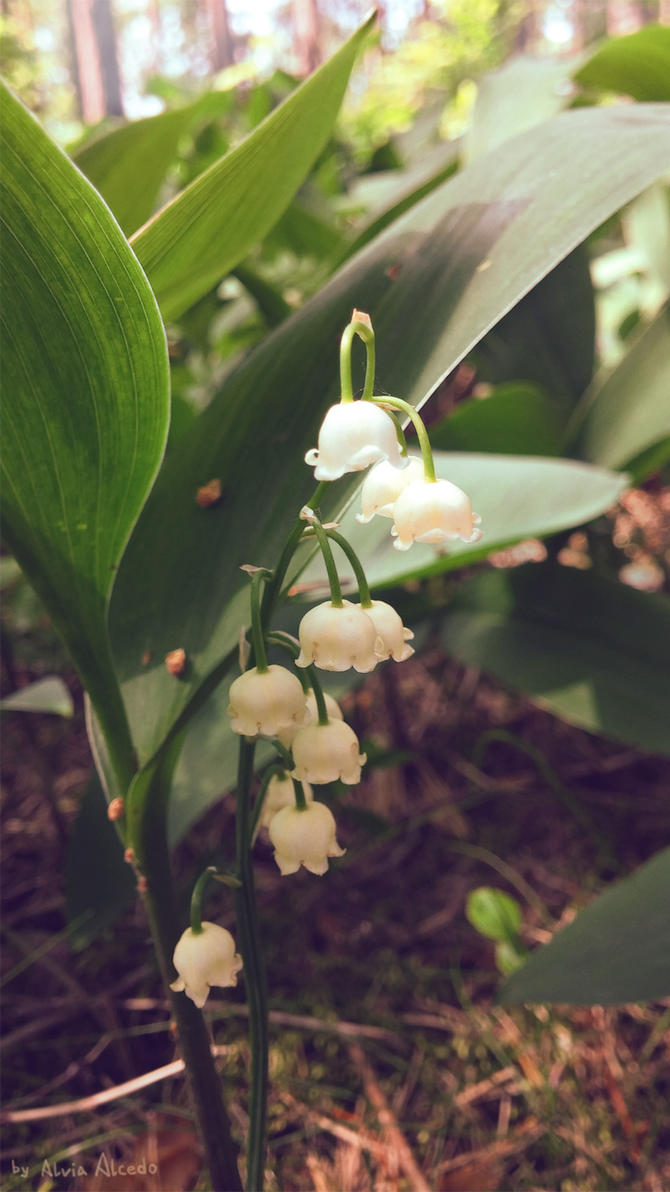 Lily of the valley by AlviaAlcedo