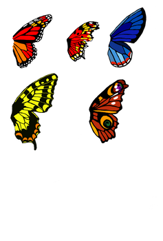Butterfly wing bases set 1