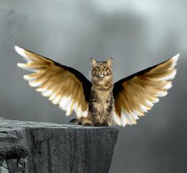 Flutter kitty