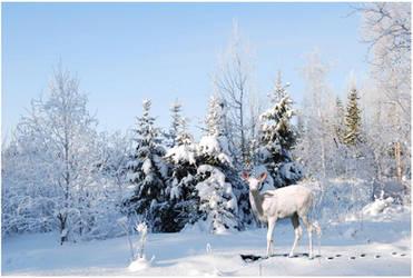 Winter's Unicorn