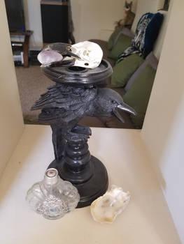 Carrion Crow Closeup