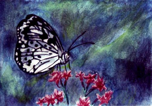Sitting Elegant: Butterfly
