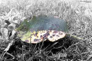Leaf by mikithemaus
