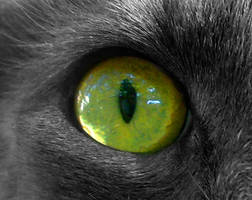 Cat's eye by mikithemaus