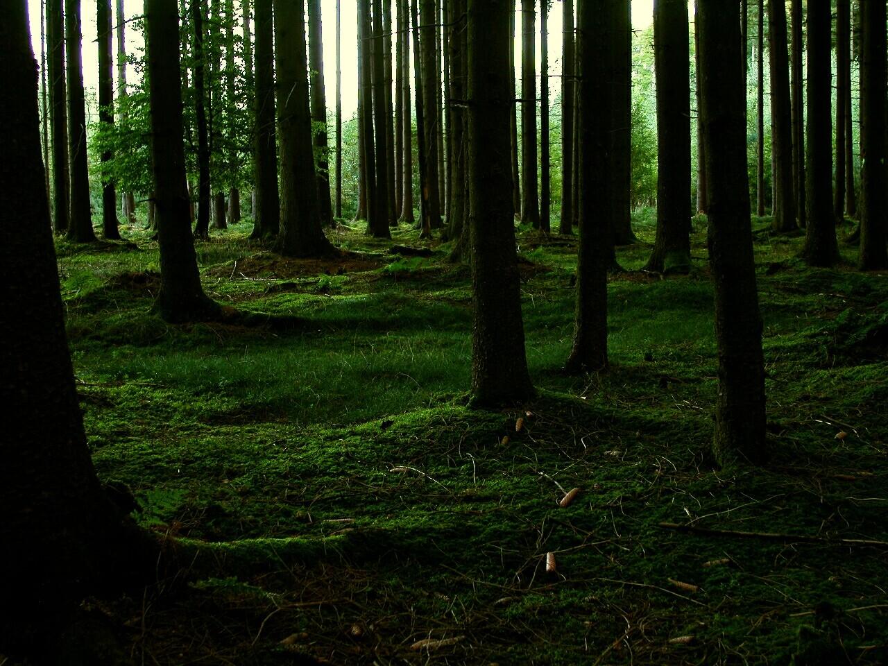 ManaXmomo-Forest one