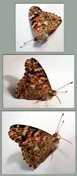 ManaXmomo-Butterfliege