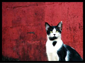 Standing Guard by La-Vita-a-Bella