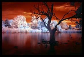 Pond III by La-Vita-a-Bella