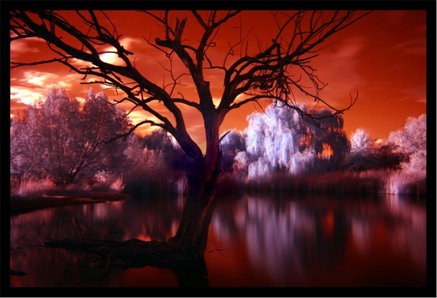 Infrared Pond II by La-Vita-a-Bella